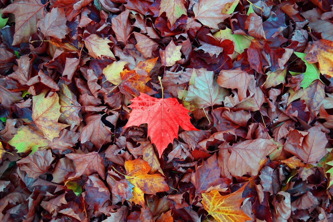 leaf-2886341_1280