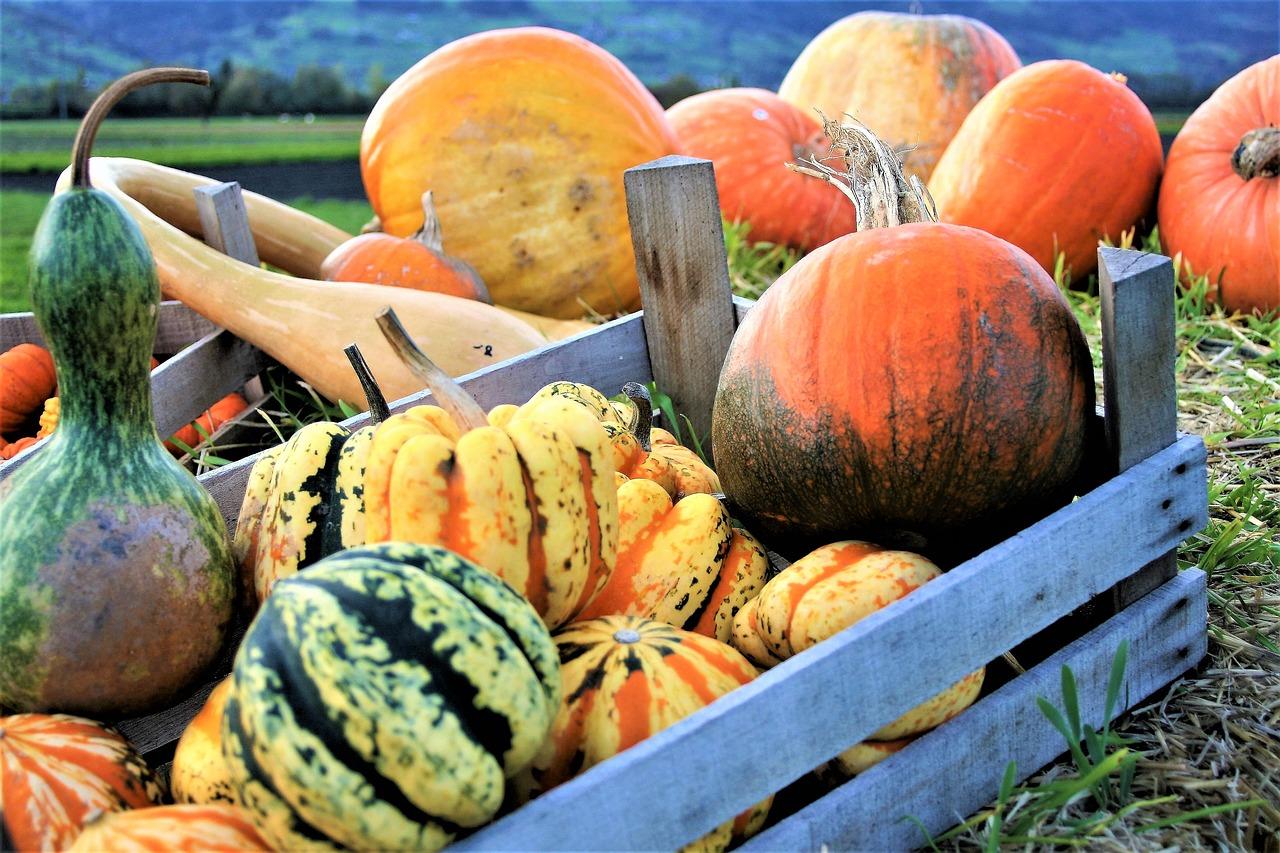 pumpkins-2889601_1280