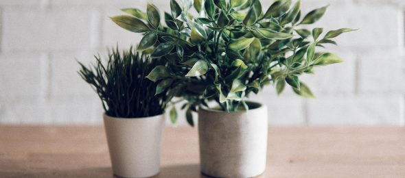 Green herbs and health